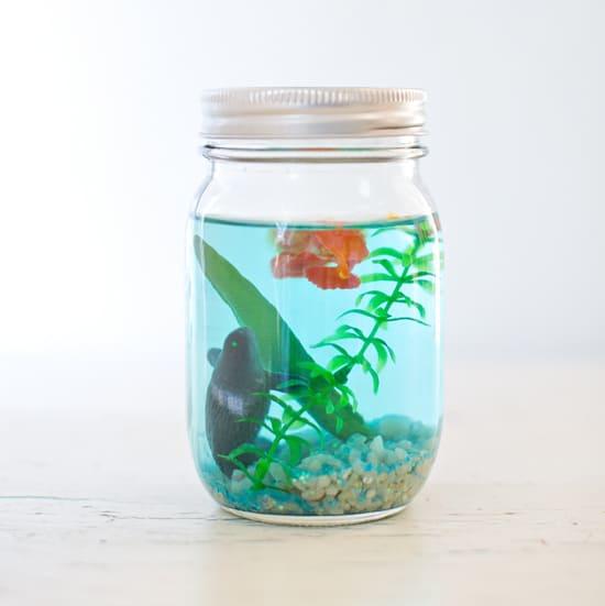 фото аквариум в банке