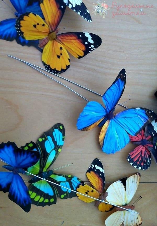Декоративные бабочки под стеклянным колпаком